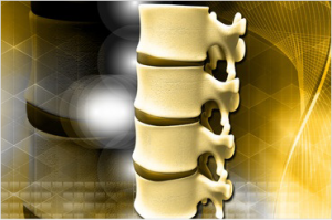 image of spine showing vertebrae and disks which can cause severe back pain