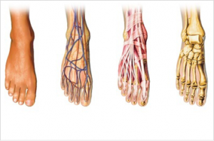Image showing internal foot structures which could lead to foot pain