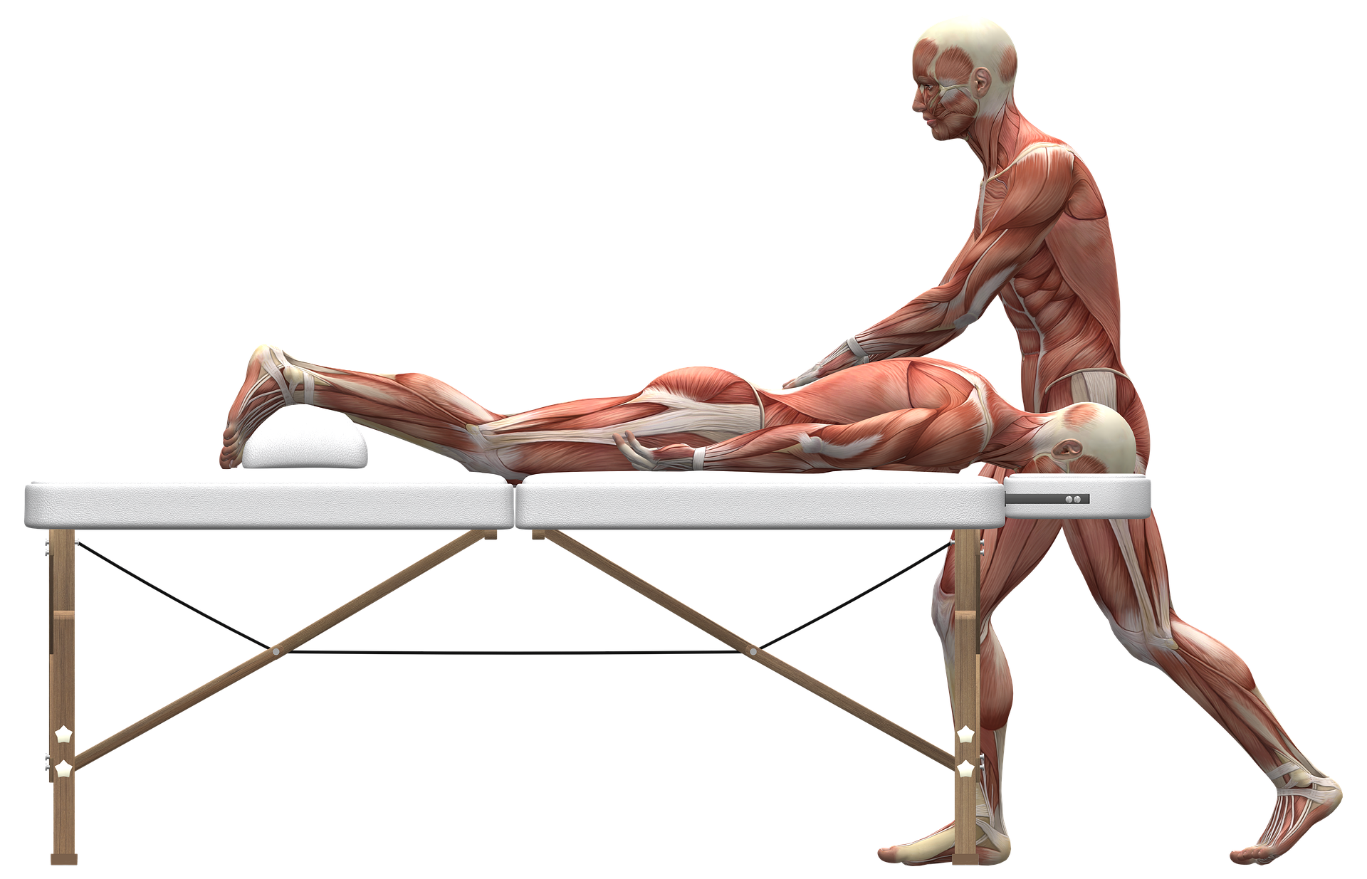 1 muscle mannequins massaging another on back pain treatment couch